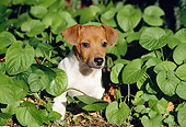 PUP 14 CB0022 01