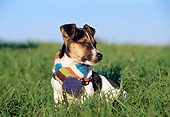 PUP 14 CB0025 01
