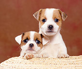 PUP 14 CB0028 01