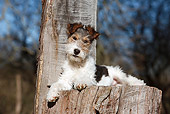 PUP 14 CB0030 01