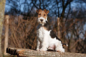 PUP 14 CB0031 01