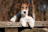PUP 14 CB0032 01
