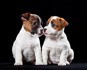PUP 14 CB0035 01