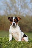 PUP 14 CB0036 01