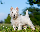 PUP 14 CB0038 01