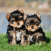 PUP 14 CB0039 01