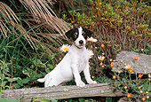 PUP 14 CE0124 01