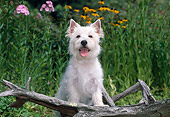 PUP 14 CE0125 01