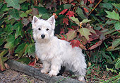 PUP 14 CE0129 01