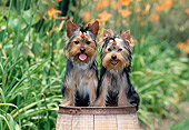 PUP 14 CE0131 01
