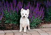 PUP 14 CE0134 01