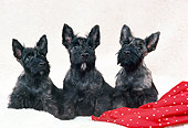 PUP 14 FA0034 01