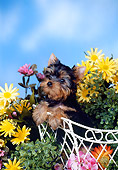 PUP 14 FA0035 01