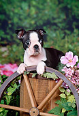 PUP 14 FA0038 01