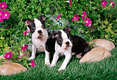 PUP 14 FA0043 01