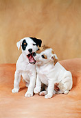 PUP 14 FA0044 01