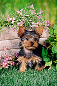 PUP 14 FA0047 01