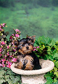 PUP 14 FA0049 01