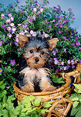 PUP 14 FA0050 01