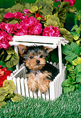 PUP 14 FA0053 01