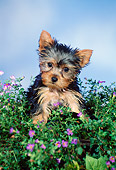 PUP 14 FA0058 01