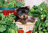 PUP 14 FA0063 01