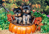 PUP 14 FA0064 01