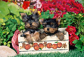 PUP 14 FA0066 01