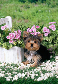 PUP 14 FA0067 01