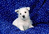 PUP 14 FA0069 01