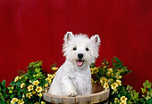 PUP 14 FA0071 01