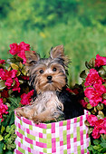 PUP 14 FA0077 01