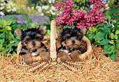 PUP 14 FA0083 01