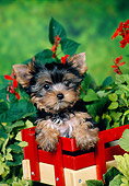 PUP 14 FA0086 01