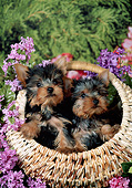 PUP 14 FA0087 01