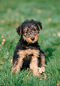 PUP 14 GL0001 01
