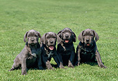 PUP 14 GL0002 01