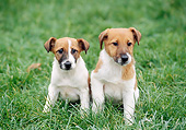 PUP 14 GL0003 01