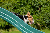 PUP 14 GL0005 01