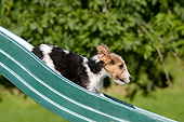 PUP 14 GL0006 01