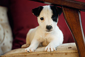 PUP 14 GR0001 01