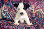 PUP 14 GR0002 01