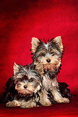 PUP 14 JE0002 01