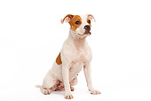 PUP 14 JE0004 01