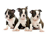 PUP 14 JE0007 01