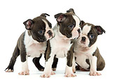 PUP 14 JE0008 01