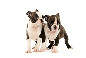 PUP 14 JE0010 01