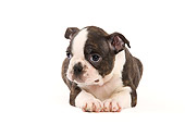 PUP 14 JE0012 01