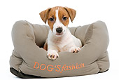 PUP 14 JE0013 01