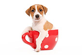 PUP 14 JE0015 01